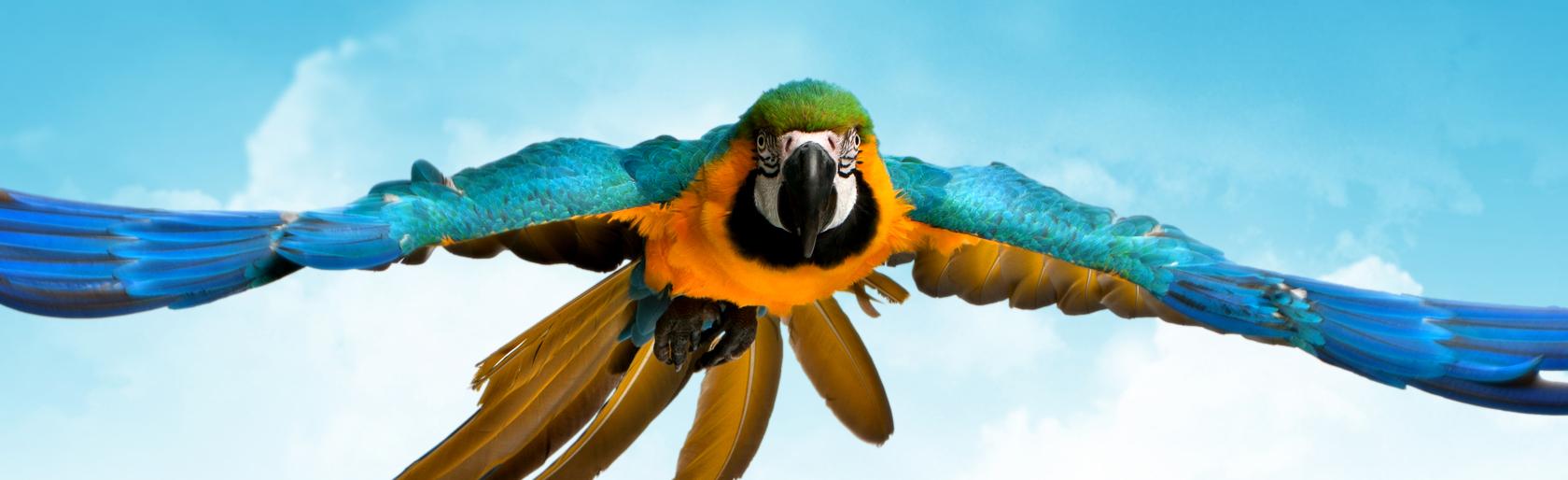 Apresentações impactantes e a piada do papagaio